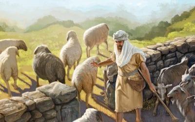 Sheep Divided from Sheep