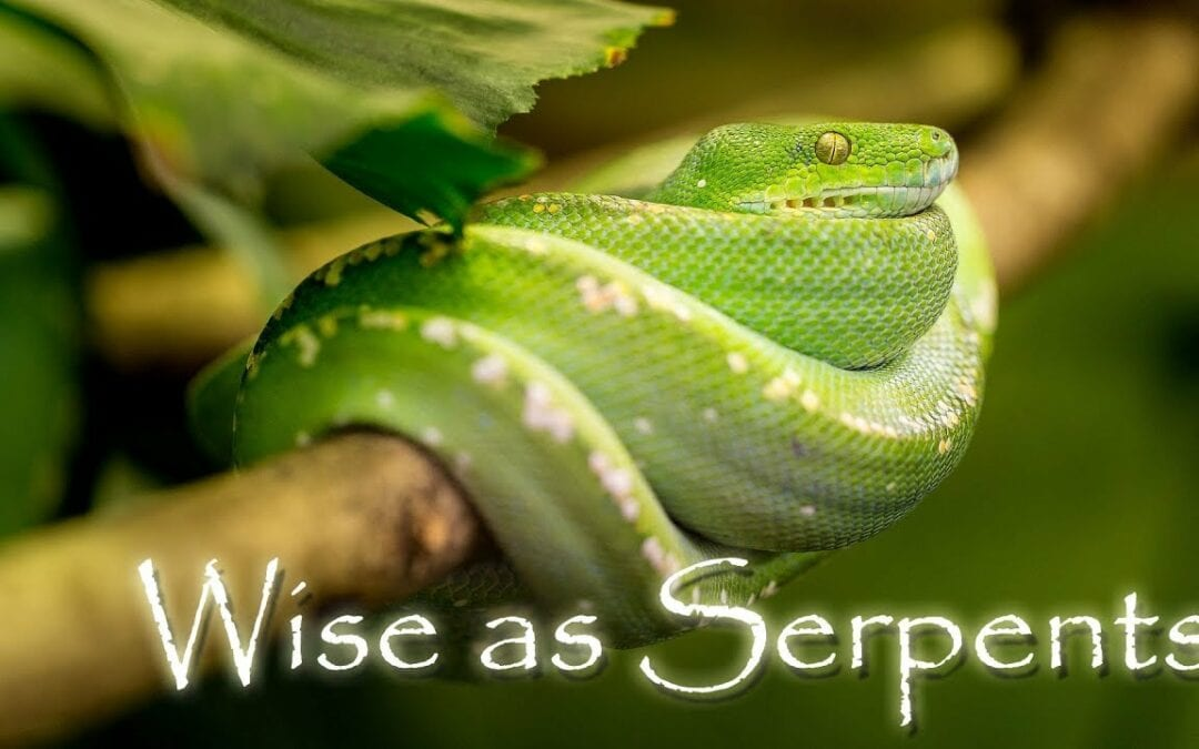 As Wise as a Serpent
